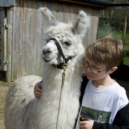 leading llamas