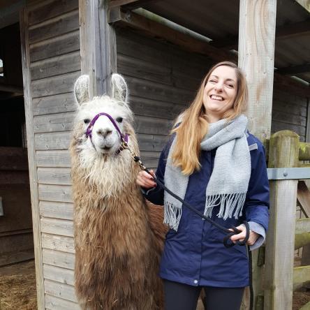 llama walking