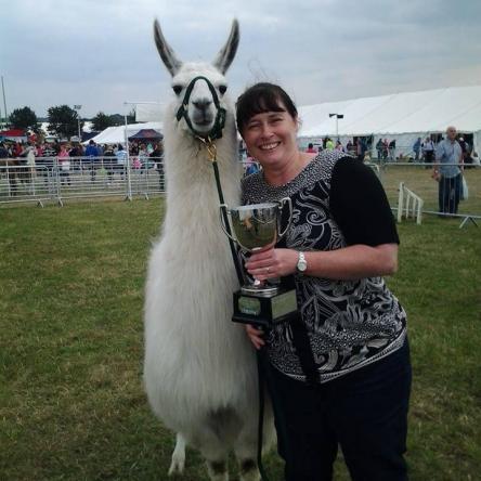 champion llama