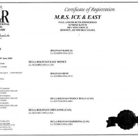 ilr certificate