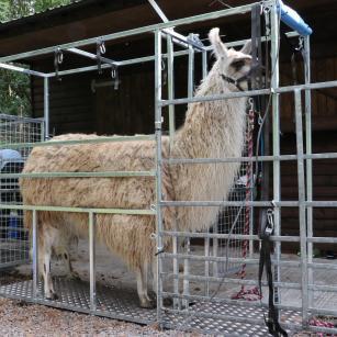 Llama Chute