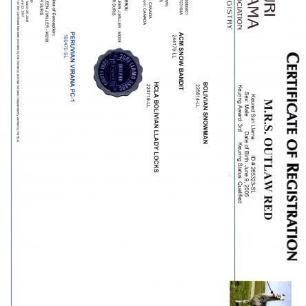 suri certificate