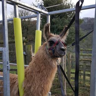 llama crush